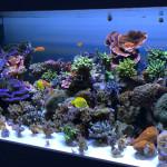led-aquarium-aquabeam-2013