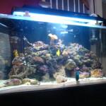 best-saltwater-aquarium