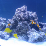 marine-habitat-500