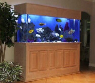 Fish-Only-Tank-Buy-Saltwater-Fish-Buy-Reef-Tank-Baton-Rouge--Louisiana~~element52