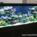 Saltwater_Fish_only_with_Live_rock_Coral_Reef_Aquarium_Artificial_Coral_Reef_Inserts_Saltwater_Marine_Fish_Tank_06