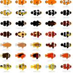 oraclownfish16x20_72crop
