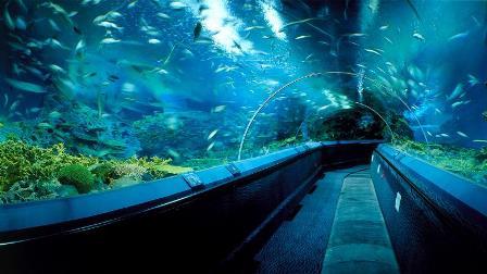 shanghai-ocean-aquarium-photo-1